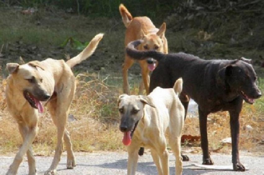 ΔΕΛΤΙΟ ΤΥΠΟΥ - Σοκάρει η περιγραφή πατέρα και γιου που έσωσαν την ζωή του 22χρονου από την επίθεση σκύλων στο Σέιχ Σου