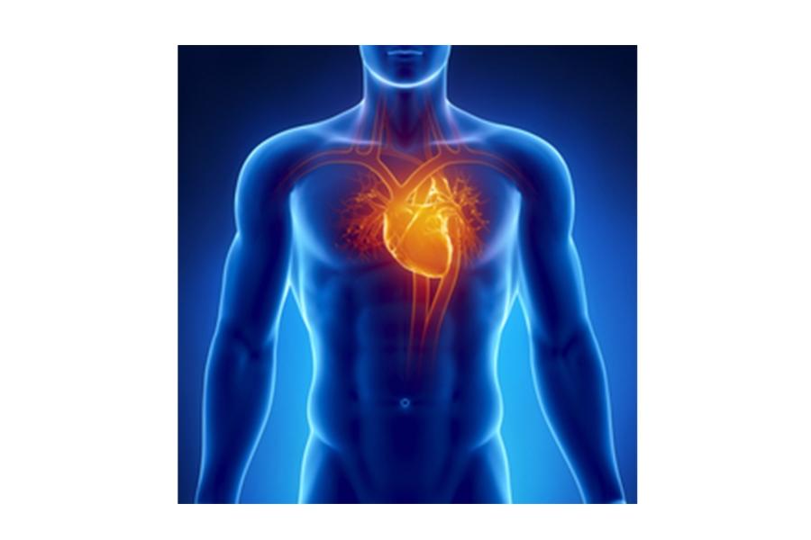 Προληπτικός καρδιολογικός έλεγχος αθλητών